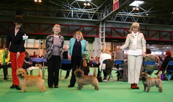 Crufts 7 mars 2014 Totte BOB ? Shortlised i Big group, Anton 3 BH + unbeaten Special Puppydog